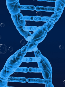 генетика сертификат и повышение квалификации