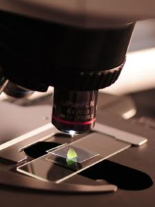 паразитология сертификат и повышение квалификации