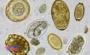 Повышение квалификации - в паразитологии